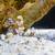 vízalatti · korall · fenék · Vörös-tenger · Egyiptom · víz - stock fotó © yongkiet