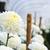 branco · jardim · fresco · flores · verde · arbusto - foto stock © yongkiet