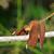 libélula · corpo · asas · grande · flores - foto stock © yongkiet