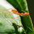 Weaver Ants or Green Ants (Oecophylla smaragdina) stock photo © Yongkiet