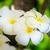 красивой · группа · цветок · дерево · тропические - Сток-фото © Yongkiet