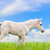 white horse foal in grass on sky background stock photo © yongkiet