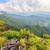 beautiful landscape at phu chi fa forest park stock photo © yongkiet