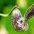 Exotic flower shaped like a chicken stock photo © Yongkiet