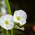 flor · blanca · hormiga · pequeño · acuático · planta · agua - foto stock © Yongkiet