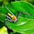 bicho · folha · planta · haste · inseto · espera - foto stock © yongkiet