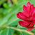 花 · 自然 · 環境 · 葉 · ハワイ · 米国 - ストックフォト © yongkiet