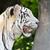 uyarmak · siyah · beyaz · kedi · resim · beyaz · siyah - stok fotoğraf © yongkiet