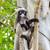 лист · обезьяны · портрет · Cute · лице - Сток-фото © yongkiet