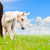 white horse mare and foal on sky background stock photo © yongkiet