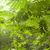 groene · bos · boom · licht · blad · achtergrond - stockfoto © yuliang11