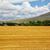 steppe altai landscape stock photo © zastavkin