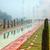Taj · Mahal · misty · matin · caché · pâle · brouillard - photo stock © zastavkin