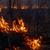Forest fire stock photo © zastavkin