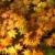 japonês · bordo · outono · vermelho · folhas - foto stock © zastavkin