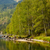 дерево · тополь · реке · глубокий · Blue · Sky · небе - Сток-фото © zastavkin