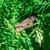 detail · hagedis · kleurrijk · drogen · tak · geïsoleerd - stockfoto © zeffss