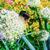 arı · çiçek · gün · batımı · yaz · yeşil · yatak - stok fotoğraf © zeffss