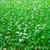 verde · fresco · trevo · campo · dia · férias - foto stock © zeffss