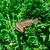 brown lizard animals stock photo © zeffss