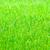 新鮮な · 緑の草 · 春 · シーズン · 画像 · 浅い - ストックフォト © zeffss