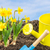 daffodils with garden tools in front of a blue sky stock photo © zerbor