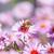 abeille · fleur · beauté · vert · usine - photo stock © zhukow