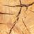 suprafata · fisuri · multe · copac · roşu - imagine de stoc © zhukow