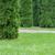 naturale · sfondo · bella · verde · offuscata · estate - foto d'archivio © zhukow