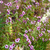 campo · flores · camomila · belo · flor - foto stock © zhukow