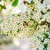 bee · verzamelen · honing · roze · bloem · voedsel - stockfoto © zhukow