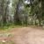 trekking · nyom · vezető · nyár · tájkép · fenyőfa - stock fotó © zhukow