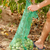 walnoot · blad · vruchten · noten · groene · bladeren - stockfoto © zhukow
