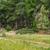 suciedad · tema · forestales · árboles · árbol · paisaje - foto stock © zhukow
