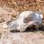 волка · череп · изолированный · зубов · мертвых · скелет - Сток-фото © zhukow