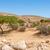 tevék · Szahara · száraz · Tunézia · égbolt · nap - stock fotó © zhukow