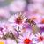 bee · voorjaar · achtergrond · schoonheid · plant - stockfoto © zhukow