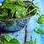 plantaardige · tuin · volwassen · voedsel · blad · groene - stockfoto © zia_shusha