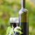 бутылку · виноград · филиала · Label · изолированный - Сток-фото © zittto