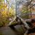 magia · nebuloso · floresta · ver · árvores · dente - foto stock © zittto