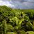 красивой · пышный · папоротник · зеленый · капли · воды - Сток-фото © zittto