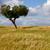 одиноко · дерево · области · Blue · Sky · облака · старые - Сток-фото © zittto