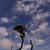 berg · Portugal · eiland · gras · natuur - stockfoto © zittto