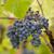 sonbahar · bağ · Portekiz · doğa · manzara · meyve - stok fotoğraf © zittto