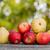 elma · armut · ahşap · masa · sonbahar · bokeh · ağaç - stok fotoğraf © zittto