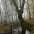 karanlık · orman · ağaçlar · puslu - stok fotoğraf © zittto
