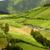 estrada · rural · backlight · floresta · pôr · do · sol · paisagem · beleza - foto stock © zittto