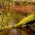 folyam · hdr · kövek · kicsi · természet · szépség - stock fotó © zittto
