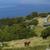 koe · veld · oceaan · natuur · landschap · berg - stockfoto © zittto