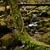 моста · тихий · реке · дерево - Сток-фото © zittto